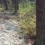 Granica bór suchy i torfowisko